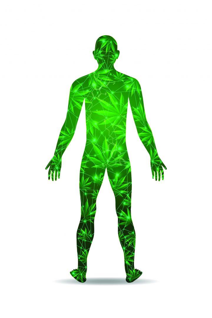 wpływ olejku konopnego cbd na człowieka